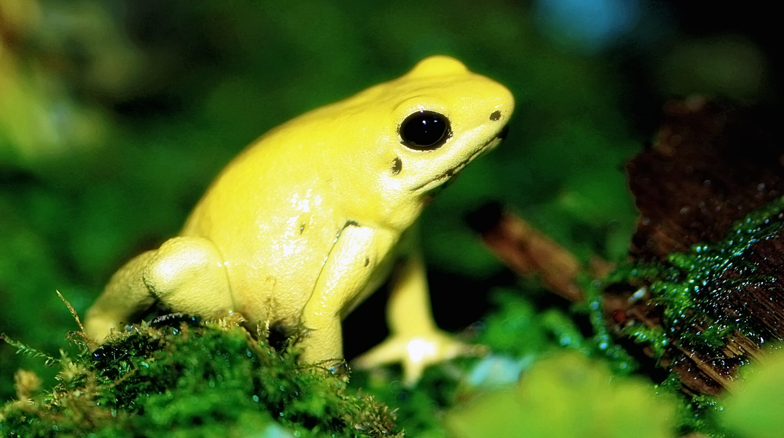 10 Rainforest Animals You Should Know About